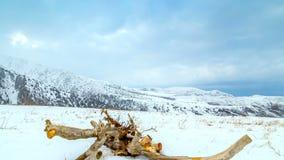 timelapse 4K Un albero secco si trova nella neve durante la bufera di neve nelle montagne archivi video