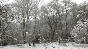 Timelapse Klipp ner ett träd i vinter arkivfilmer