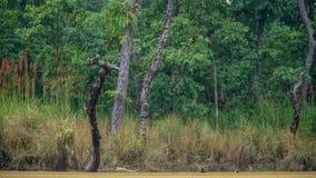 Timelapse Lasowy jezioro z Waterfowl ptakami zbiory wideo