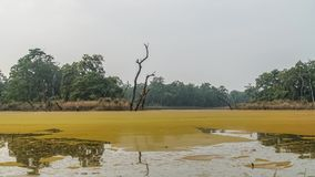 Timelapse Lasowy jezioro z Waterfowl ptakami zdjęcie wideo