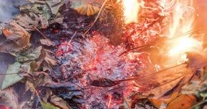 Timelapse loopable video van een brandende en rebirthing bruine stapelstapel van bladeren en takjes in de herfst in 4k 4096 pixel stock footage