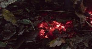 Timelapse loopable video van een brandende en rebirthing bruine stapelstapel van bladeren en takjes in de herfst in 4k 4096 pixel stock video