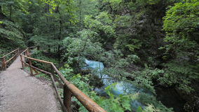 Timelapse - Lush greenery in a forest with river and a walkway for hikers stock video footage