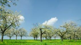 Timelapse - luz y sombra sobre cerezos almacen de metraje de vídeo