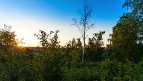 Timelapse met zonsondergang in bos stock videobeelden