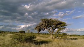 Timelapse Mezquite träd i fälten lager videofilmer