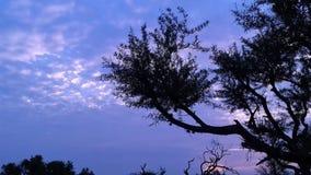Timelapse Mezquite trädsolnedgång arkivfilmer