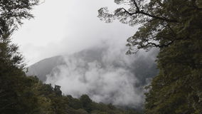 Timelapse of mist rising over a rainforest. Time lapse of mist rising from a temperate rainforest in New Zealand stock video footage