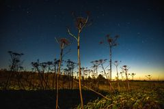 Timelapse movente das estrelas e das plantas velhas vídeos de arquivo