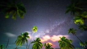 Timelapse Movie of Milky Way with Palm Tree. On Zanzibar island Tanzania stock video