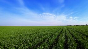 Timelapse - moving clouds over wheat field or barley crops. Fast motion of time direction in agronomic industries