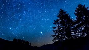 Timelapse night sky stars. Mountain and trees silhouette. Night mountain timelapse across fir forest