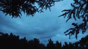 Timelapse nocy dzień zmienia w wiecznozielonym sosna lesie, chmurny niebo zbiory wideo