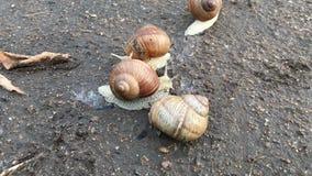 Timelapse - o caracol rasteja na estrada na natureza vídeos de arquivo