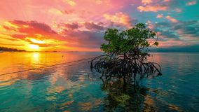 Timelapse Ocean at colorful bright sunset with clouds and reflection of a Mangrove tree in water in Nusa Lembongan. 4K Timelapse in Nusa Lembongan and Nusa stock footage