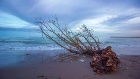 Timelapse op de kust van het overzees bij zonsondergang met een voorwaartse boomboomstam stock videobeelden