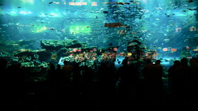 Timelapse of people watching fish at the huge aquarium stock video footage