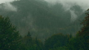 Timelapse of a Pine Tree Forest with Mist and Fog in Transylvania, Romania stock video