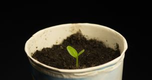 Timelapse of plant growing stock footage