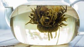 Timelapse process av att brygga kinesiskt te för blomma i en glass tekanna arkivfilmer