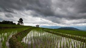 Timelapse-Reisfeld und Wolke von Verbot pabongpiang in Chiangmai, Thailand stock footage