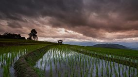 Timelapse rice field and cloud of Ban pabongpiang in Chiangmai, Thailand stock video