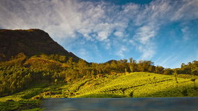 Timelapse scenery of plantations under the mountain. Andreev. stock footage