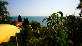 Timelapse of sea waves in the Yalta Gulf with tree. Timelapse of sea waves in the Yalta Gulf windy day stock footage