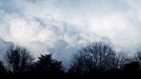 Huge fluffy clouds behind trees timelapse. Timelapse shot of huge bank of clouds moving behind rows of trees stock footage