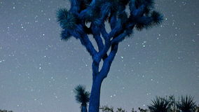 Timelapse stars spinning over joshua tree stock video