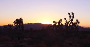 Time Lapse: Sunset at Joshua Tree National Park, California Desert. Timelapse of the sun setting behind iconic Joshua Trees and mountains of Joshua Tree National stock video footage