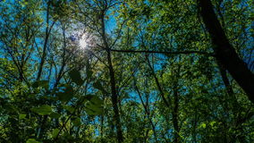 Timelapse the sun shines through the leaves of the trees in the forest green succulent plant fresh green blue sky. Beautiful picture contrast, the sun through stock footage