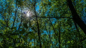 Timelapse the sun shines through the leaves of the trees in the forest green succulent plant fresh green blue sky stock video footage