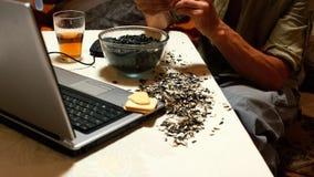 Timelapse: Sunflower seeds stock video footage