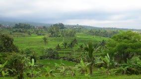 Timelapse Terraços do arroz em Tegallalang, Ubud, Bali, Indonésia filme