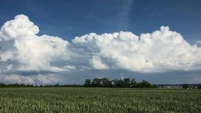 Thunderclouds developing over a wheat field stock footage
