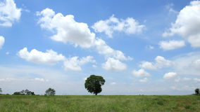 Timelapse tree in field. Timelapse tree in field, clouds running and blue sky background stock footage