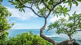 Timelapse of tropical island Bali, Indonesia, Asia. View from the cliff, sunny day, amazing clouds. Plumeria frangipani. Timelapse of tropical island Bali stock footage
