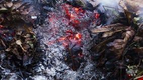 Timelapse vände om videoen av ett brinnande ekblad i askaen av en stor hög av sidor och ris i höst i 4k 3840 PIXEL, 10fps arkivfilmer