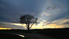Timelapse van enige boom bij zonsondergang stock video
