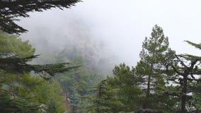 Timelapse van nevelige mist die over cederbomen blazen stock videobeelden