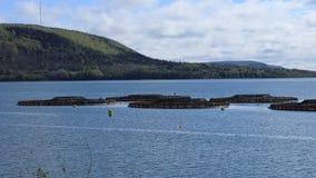Timelapse van zalmkwekerij in Digby, Nova Scotia 4K stock footage