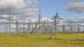 Timelapse van zich het vormen en het vliegen betrekt over het dode hout in Siberië, Yamal, Rusland stock footage