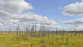Timelapse van zich het vormen en het vliegen betrekt over het dode hout in Siberië, Yamal, Rusland stock videobeelden