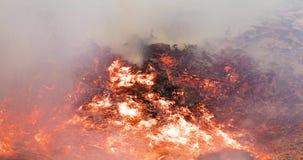 Timelapse video av en brinnande stor hög av sidor och ris som tillbaka kommer från askaen i höst i 4k 4096 PIXEL, 24fps lager videofilmer