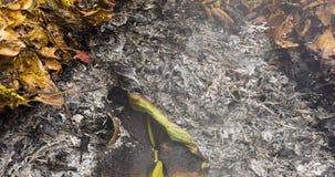 Timelapse video av ett brinnande stort grönt blad i askaen av en stor hög av sidor och ris i höst i 4k 4096 PIXEL, 24fps stock video