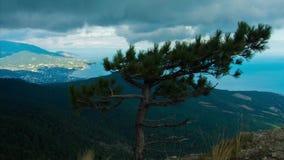 Timelapse vintergrön trädgran eller gran överst av seascape för högt berg med hamnen och blå himmel arkivfilmer