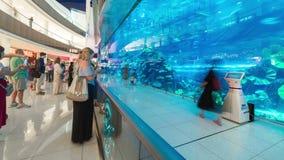 Timelapse von Leuten vor dem Dubai-Aquarium-und unter Wasser -innere Dubai-Mall stock video footage