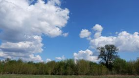 Timelapse of white clouds forming above a green forest and on a blue sky. 4k stock footage