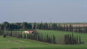 Timelapse of wind waving trees in rural area stock footage